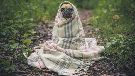 Prepare your HVAC system for fall dog wrapped in blanket